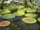 Берли́нский ботани́ческий сад